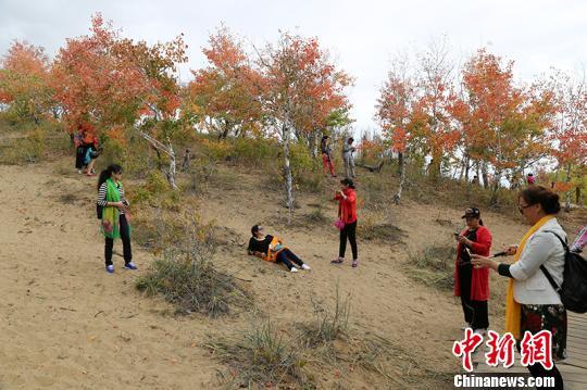 游客领略满山红叶自然美景。 杨东东 摄
