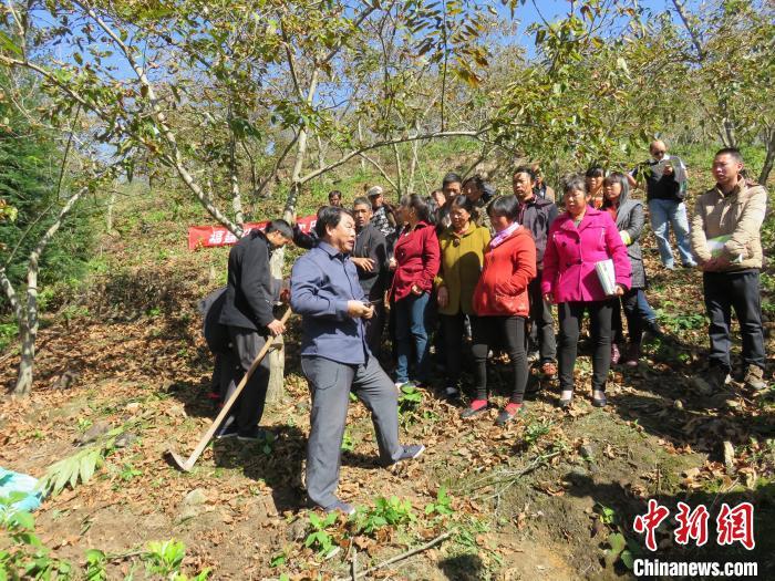 图为科技特派员教授种植技术。 屏南县委组织部 供图 摄