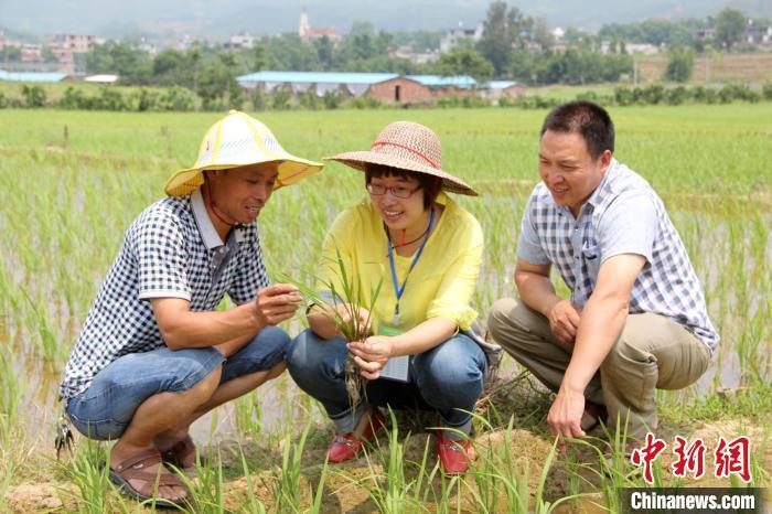 图为霞浦县扶贫工作队深入田间地头开展技术指导。 霞浦县委组织部 供图 摄