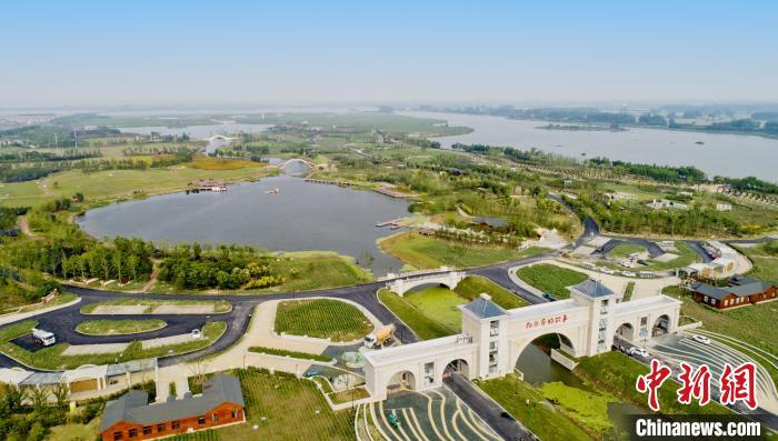 向日葵的故事。金湖县文化广电和旅游局供图